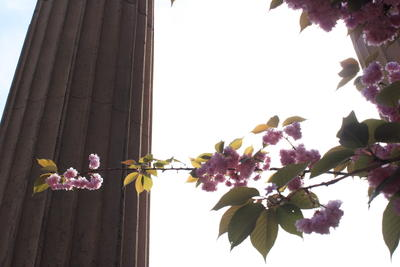 Flowers and pillars